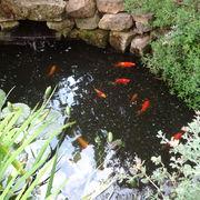 Pond July 2014