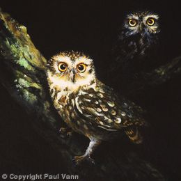Eye-catchers (Little Owls)