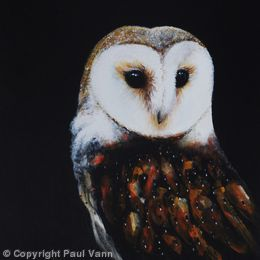 Eye to Eye (Barn Owl)
