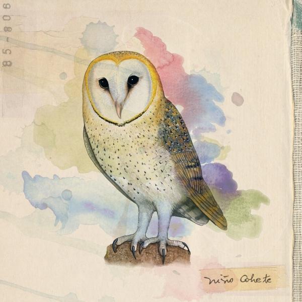 Niño Cohete - Aves de Chile