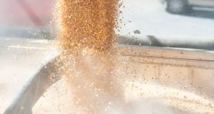 Grain_LOL corn free to use