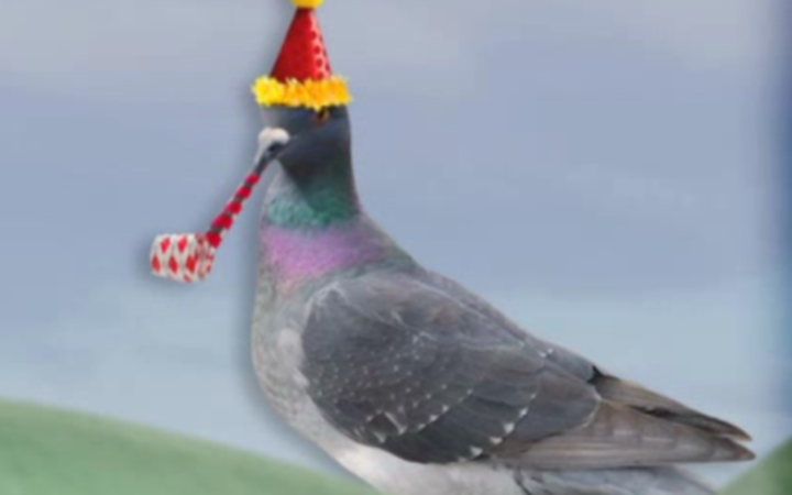 Birthday_Pigeon.png?1456955061