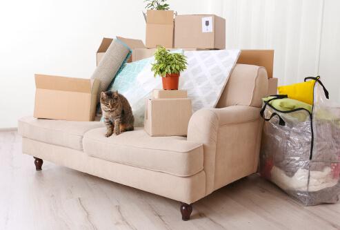 Furniture & Appliances
