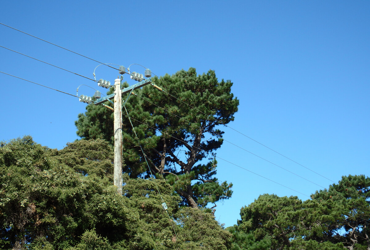 Certified Utility Arborist Services