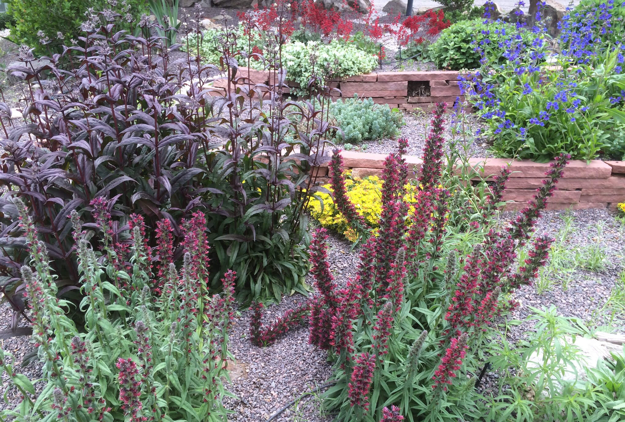 Garden Design & Installation and Maintenance