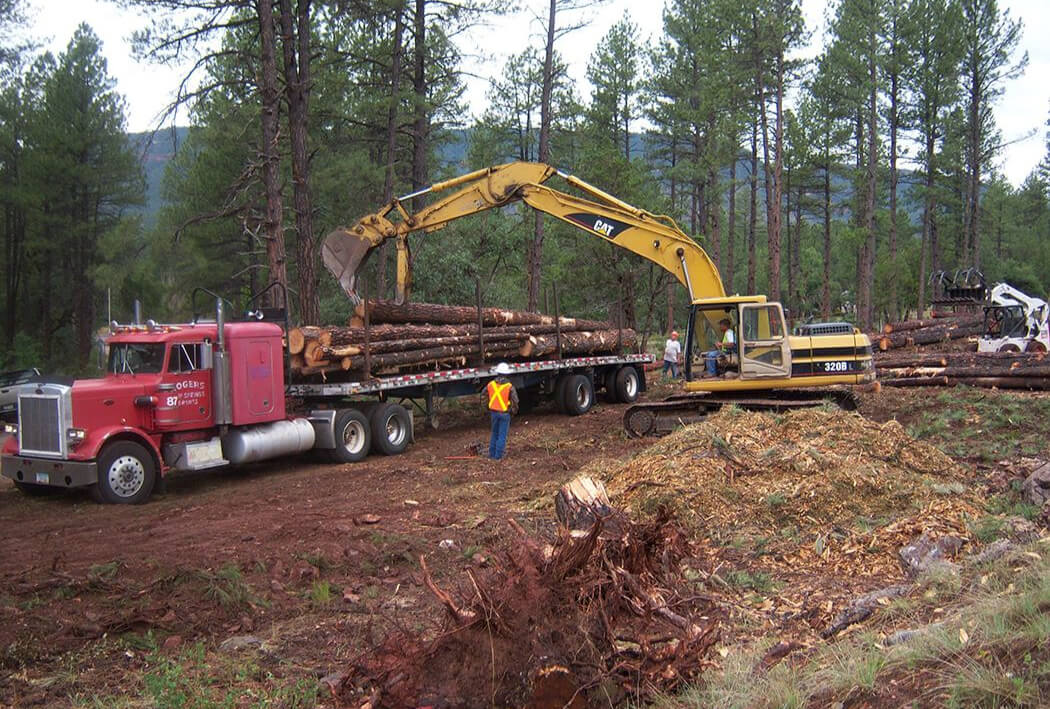 Our Tree & Logging Services