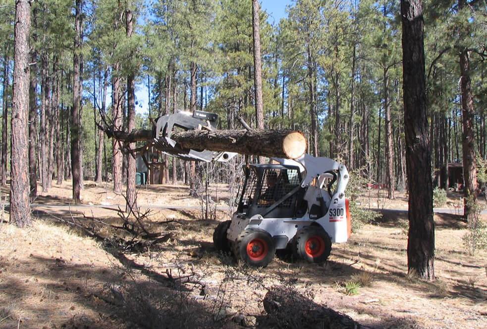 Hot Tip - Hazard Tree Assessment