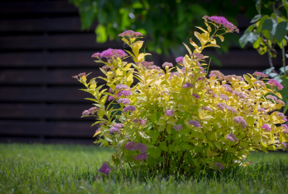 Fine pruning of Ornamental Shrubs and Trees