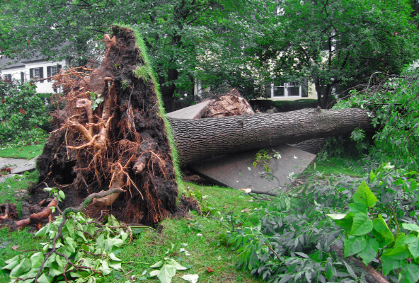 Storm Damage Tree Care and Removal