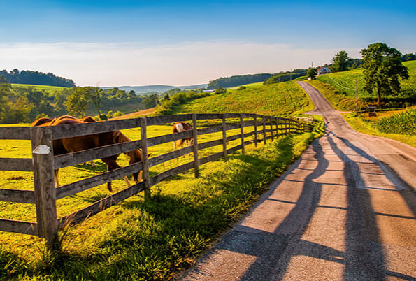 Farm & Ranch Insurance