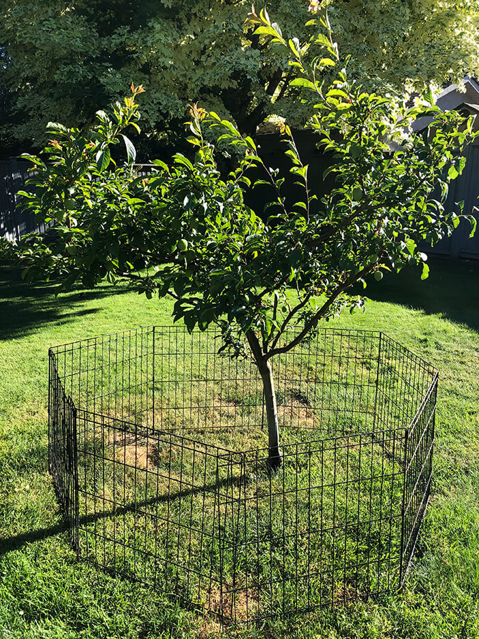 Fruit Tree Pruning in Victoria, BC