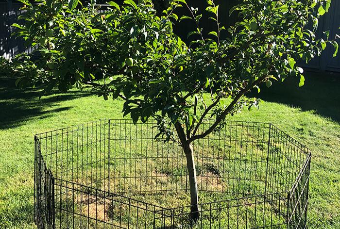 Thinning, Windsail & Fruit Tree Pruning