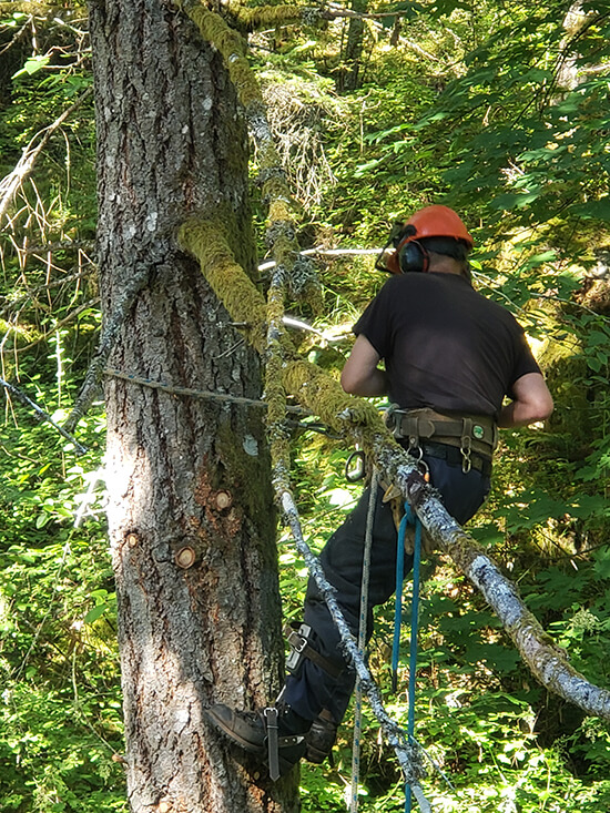 Tree Trimming in Victoria