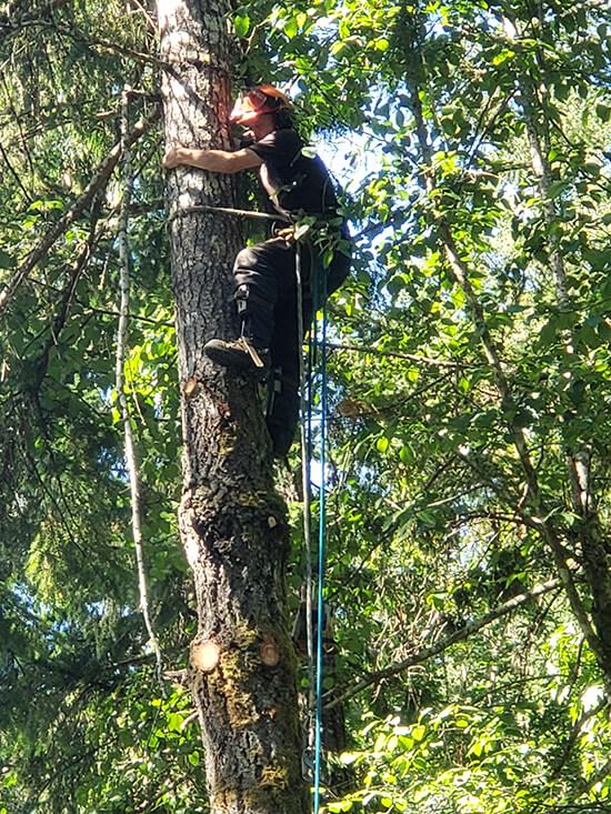 Tree Services in Victoria