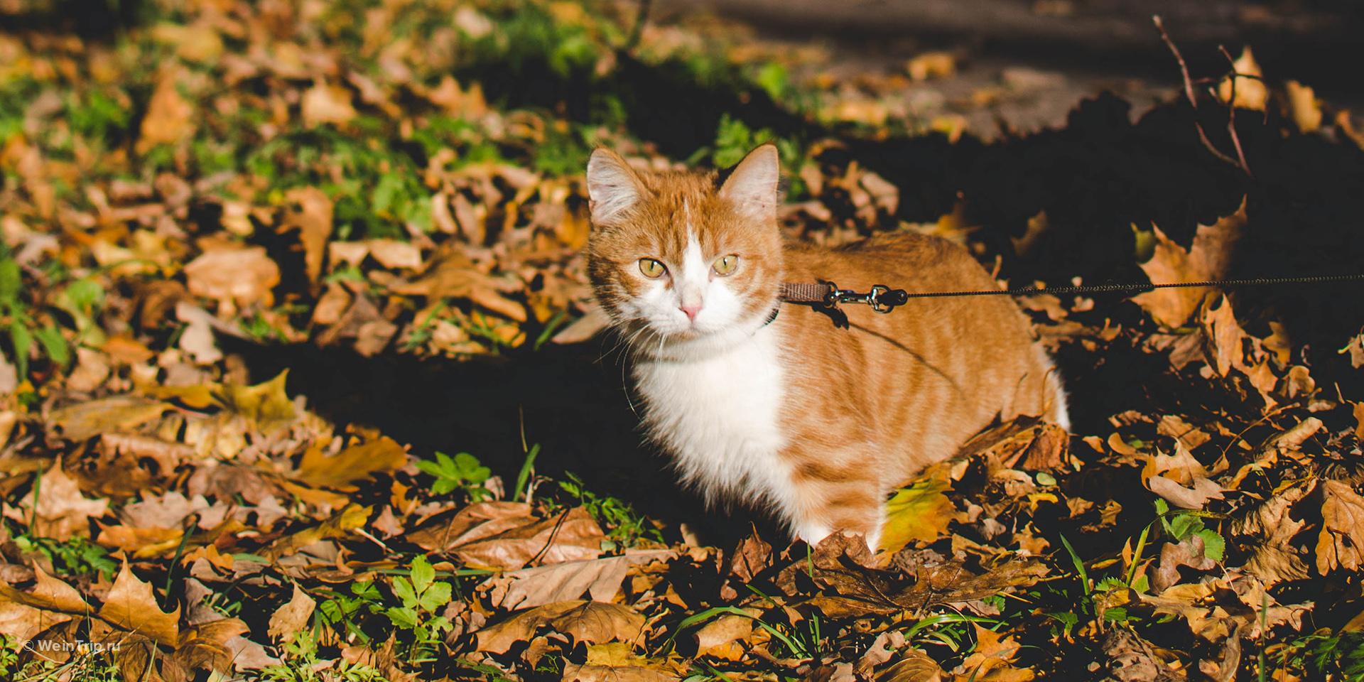 Приучить кота к машине и путешествиям