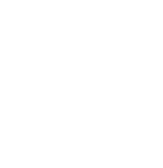 North East Lincolnshire Council: Adult services review