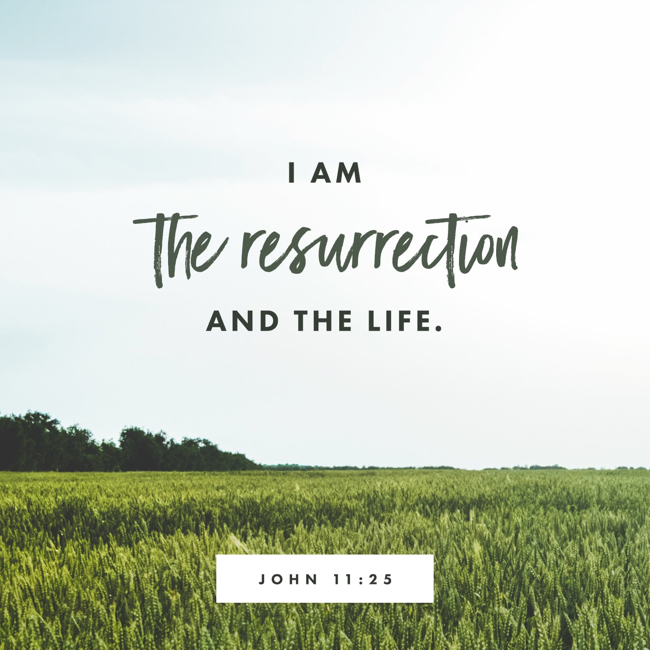 John 11:25 NIV