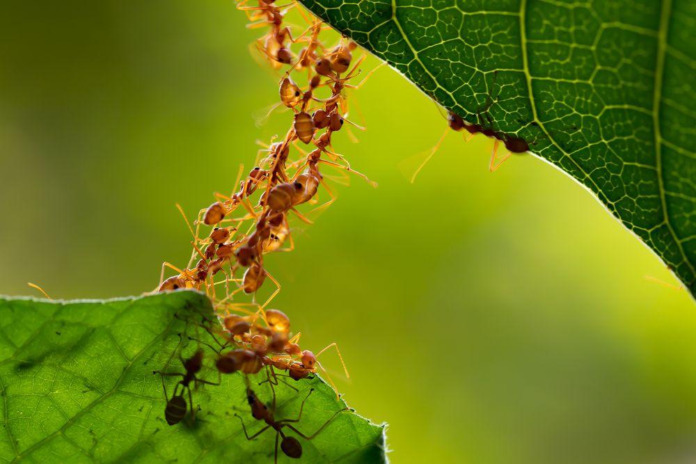 gastos-hormiga