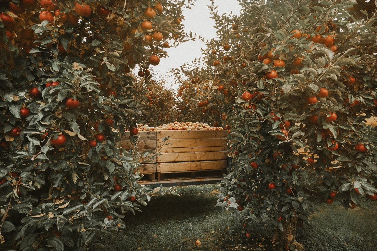 These Apple Orchards In Missouri Are Perfect For An Autumn Day Trip