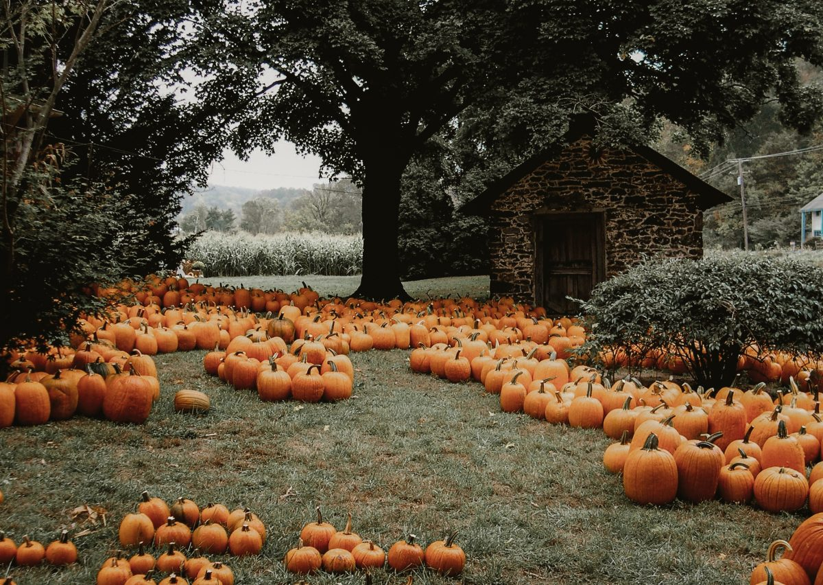 5 Charming Pumpkin Patches In Missouri You Have To Visit This Autumn