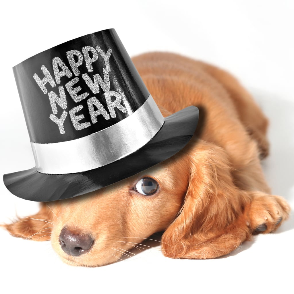 3 New Year's Eve Safety Tips for Pets