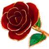 ft-red-rose