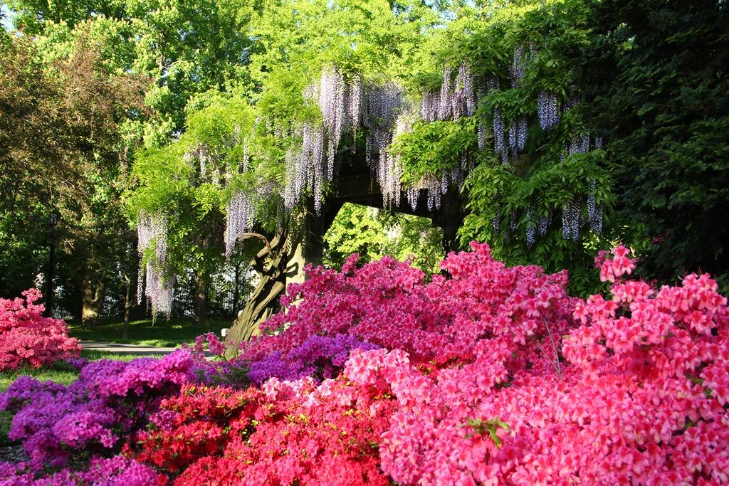 Garden admission saturday 5 6 17 brooklyn botanic garden - Brooklyn botanical garden admission ...