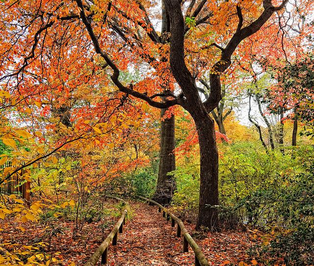 Brooklyn Botanic Garden Garden Admission