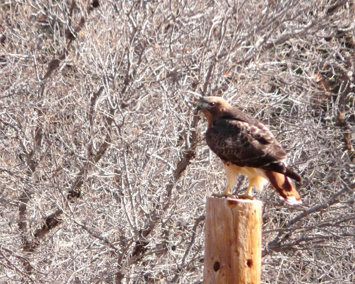 winter nature tour hosted by denver botanic gardens cherokee ranch