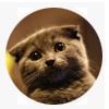 Animal's Mascot