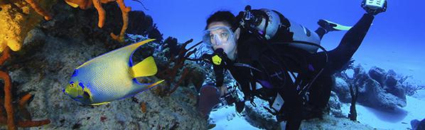 aqua-safari-diver.png