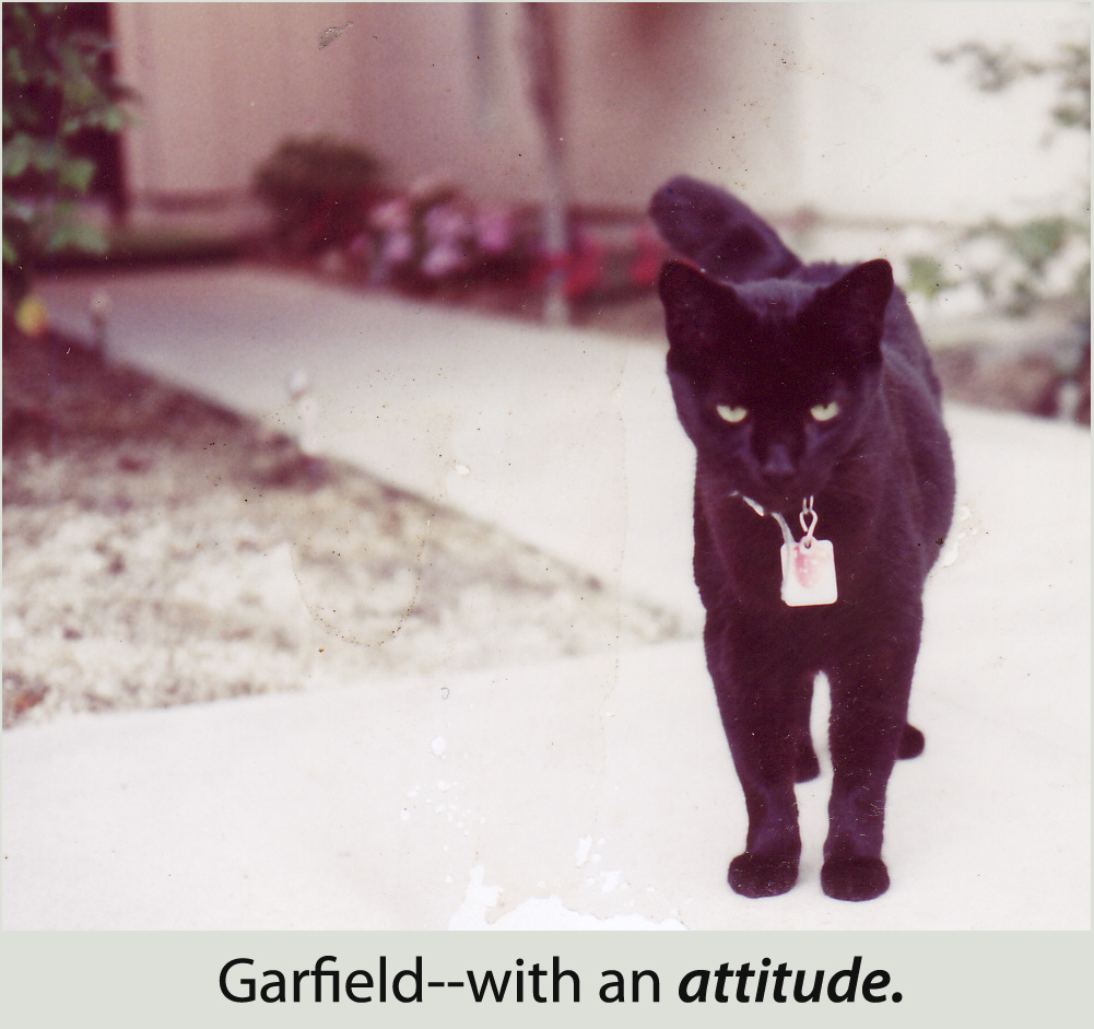 Garfield was all black with an attitude.