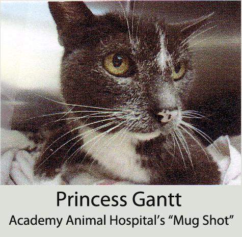 Academy Animal Hospital takes 'Mug Shots' of all their patients - this is Princess' Mug Shot