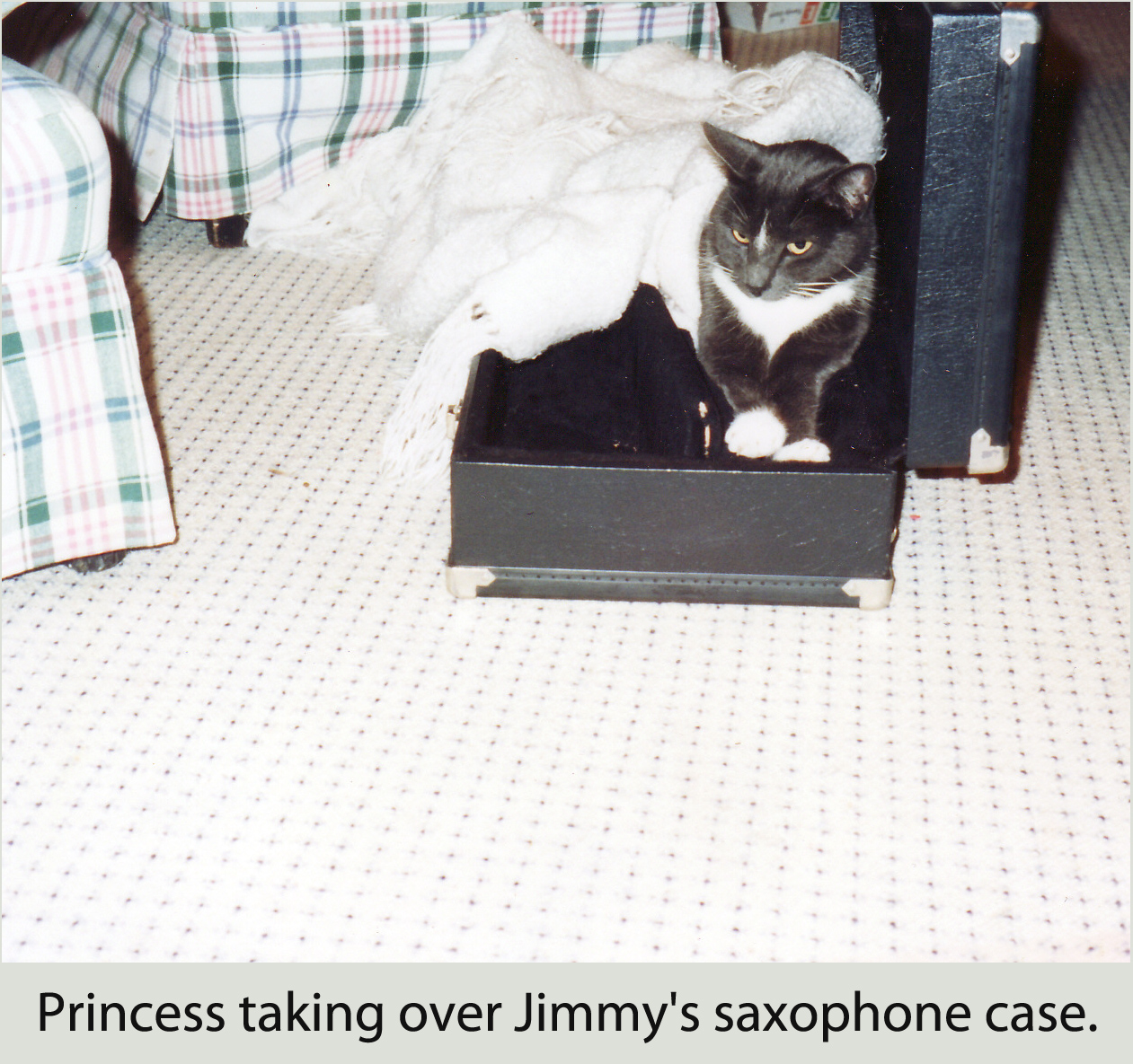 Princess hanging out in Jimmy's saxophone case