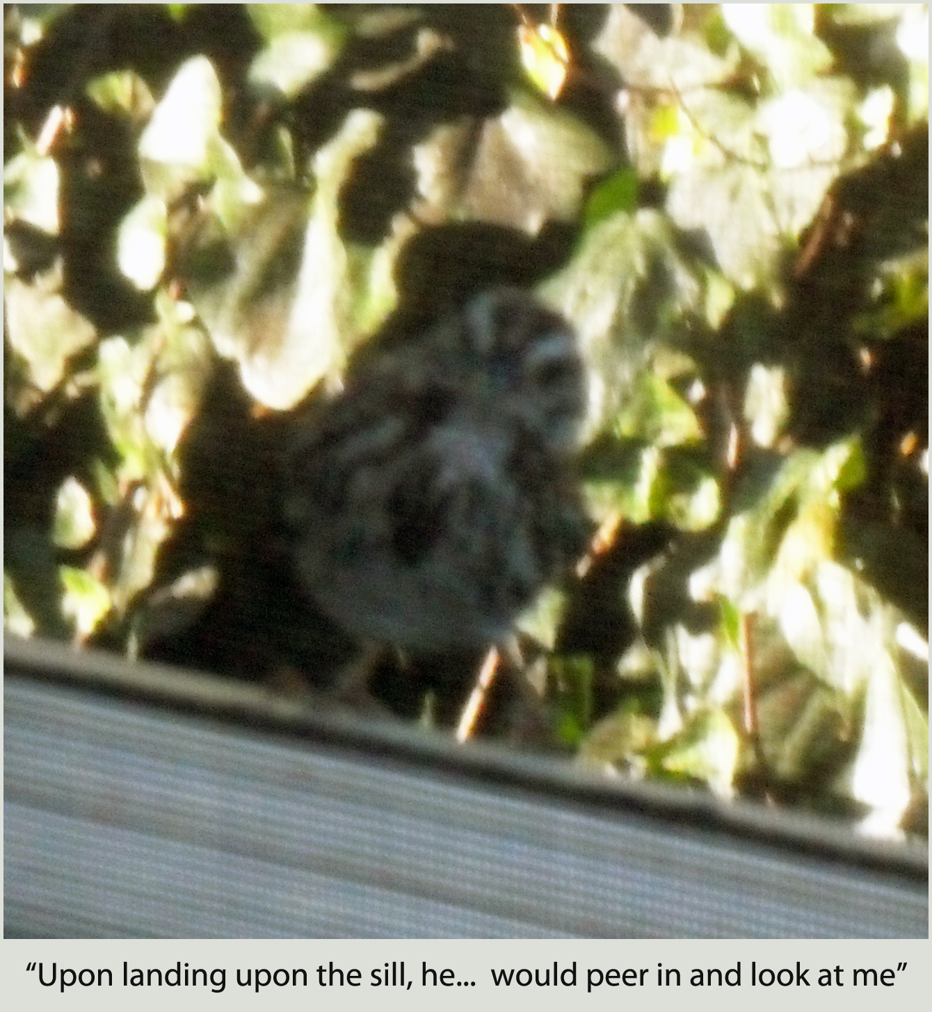 Upon landing upon the sill, the finch would peer in and look at me and peck on the window — completely unafraid.
