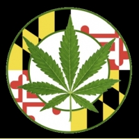 Maryland MMCC card holders strain talk