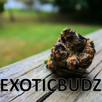 Exoticbudz207