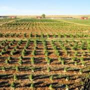 Los Suenos Farms