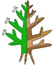 7 World Tree.jpg