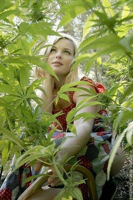 gachi weed red
