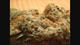 Meen green delivery west la culver city1520160314 5091 1dfaa28
