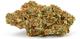 Dr green thumb2520160314 19587 qfutuz