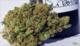 Dr green thumb3320160314 19587 h572lc