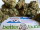 Better buds west la westwood1420160314 21320 32fwdr