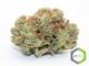 Rite greens delivery sd 11720160603 24817 w6i1x5