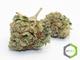 Rite greens delivery 12020160603 26427 1dv16gv