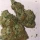 Hijynx cannabis club belmont shore1120160615 28975 thbvrn