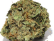 Ol hippie 420 lancaster1420160720 10212 1ykijsl