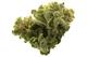 Cannajuana releaf620160720 2383 l1a4op