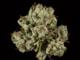 Herbalife1820160802 22496 qmbub4